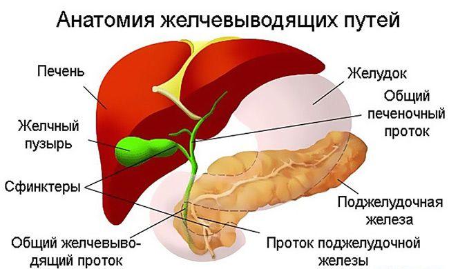 Патологические процессы в желчевыводящих путях провоцируют развитие опухоли
