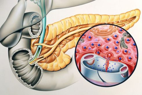 Що виробляється підшлунковою залозою?
