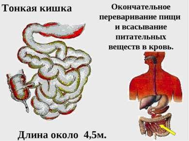 Дивертикулёз тонкого кишечника симптомы