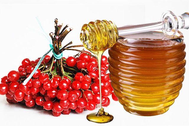 Мед и калину смешивают в равных пропорциях