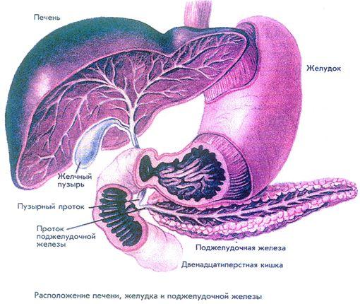 Гепатомегалия, гепатоз поджелудочной железы