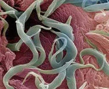 Глисты у ребенка в 2 года, симптомы и лечение гельминтов у детей 2 лет