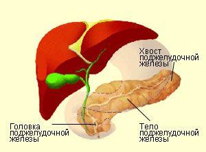 Головка поджелудочной железы