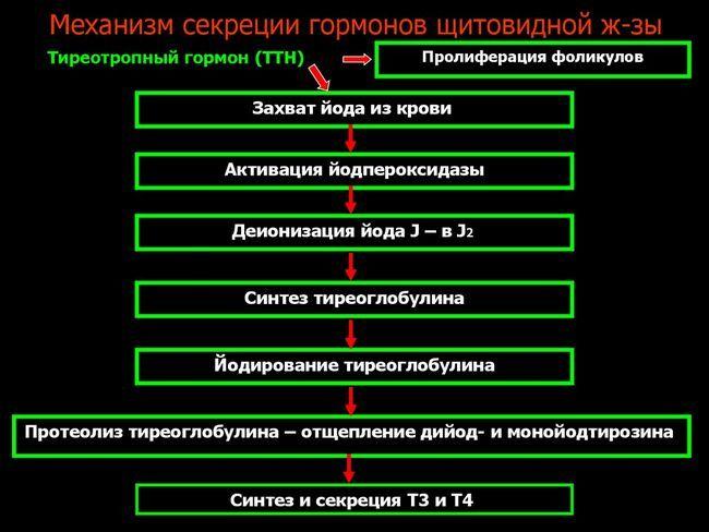 Как правильно оценивать показатели анализа крови на ттг