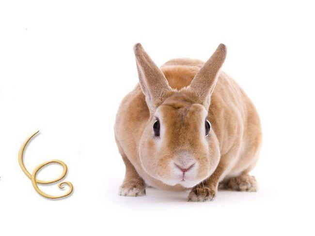 Как проявляется гельминтоз у кроликов?
