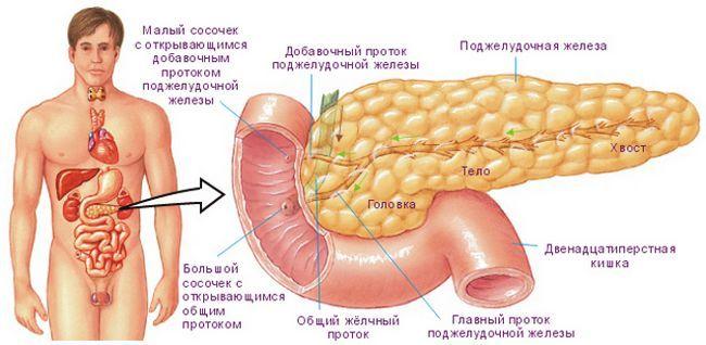 Роль гормонов поджелудочной железы