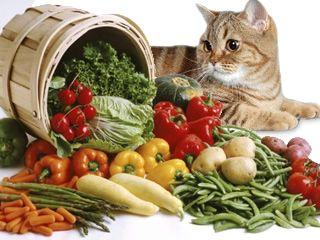 Корм, харчування і дієта для кішок і котів при панкреатиті, ніж годувати?