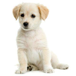 Лечение панкреатита у собак: как и чем лечить поджелудочную железу?