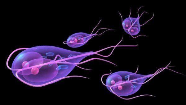 Лямблиоз: как избавиться от паразитов и сохранить здоровье