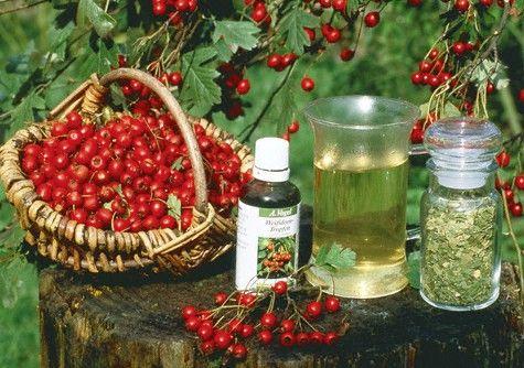 Народные средства при остром панкреатите, лечение травами при обострении