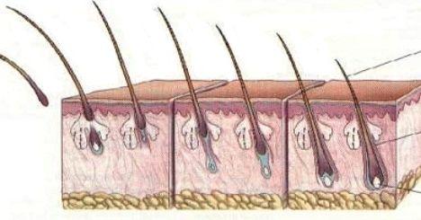 От чего происходит потеря волос с луковицей и как с этим бороться?