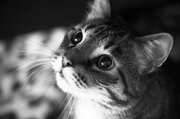 Панкреатит у кошек и котов (котенка), причины воспаления поджелудочной железы