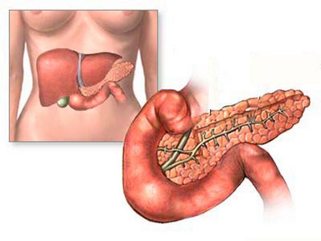 Печень и поджелудочная железа: строение, функции, роль