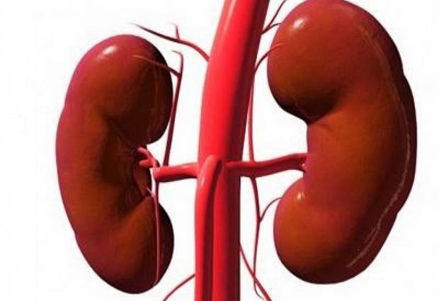 Поджелудочная железа и почки при панкреатите