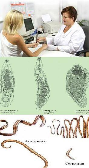 Правильное лечение глистов у взрослого человека, как лечить гельминтов?