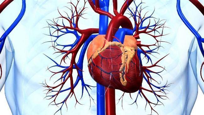 Воспаление мышц сердца приведет к неправильной работе сердца
