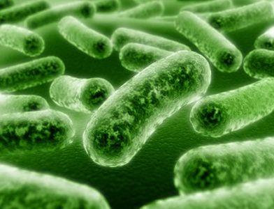 Пробиотики при колите