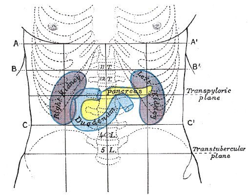 Проекция поджелудочной железы