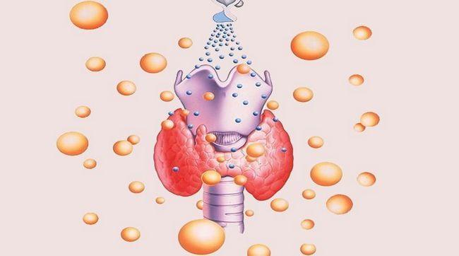 Проведение анализа на определение уровня гормонов щитовидки