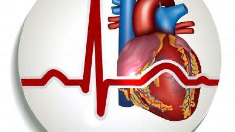 Расшифровка кардиограммы сердца с синусовым ритмом