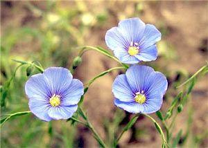 Семена льна при панкреатите для лечения оджелудочной железы
