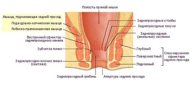 Сфинктерит прямой кишки