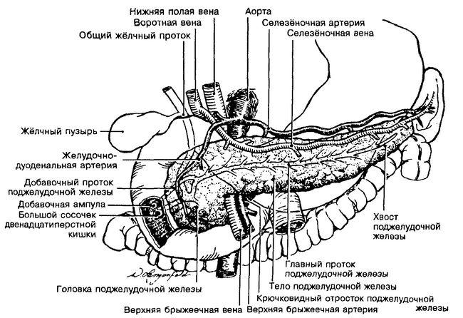 Шейка поджелудочной железы