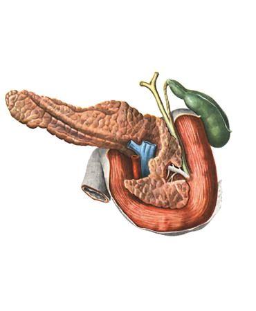 Сік підшлункової залози і його травна функція, які ферменти містить?