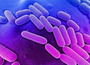 Тактика лечения клебсиеллы в кишечнике