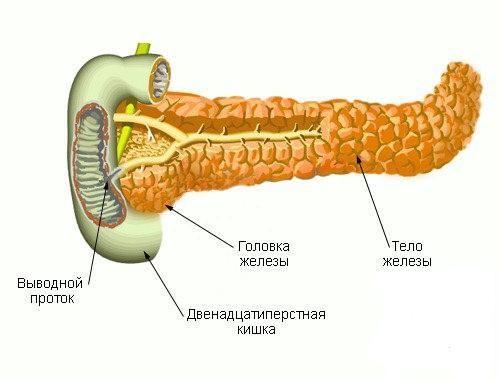 Тело поджелудочной железы