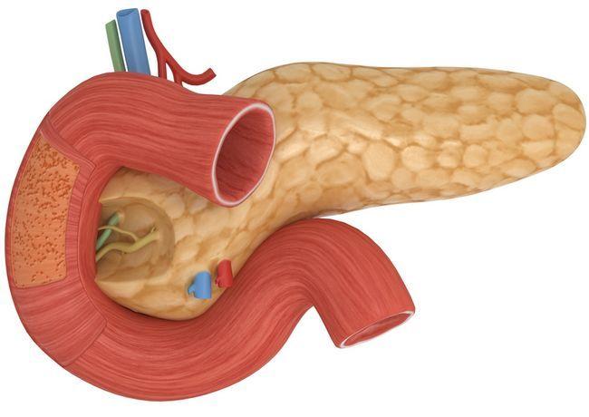 Вид поджелудочной железы, как выглядит?