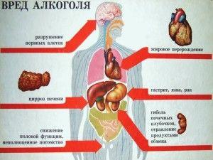 Вред пива для организма человека