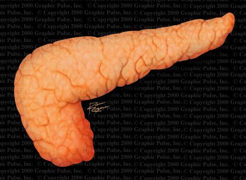 Підшлункова залоза у людини