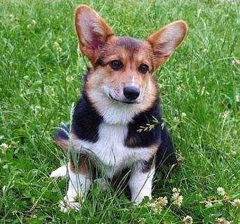Заболевания поджелудочной железы у собак: панкреатит, недостаточность и другие болезни