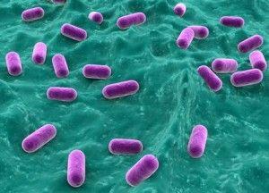 Зачем для кишечника нужны бифидобактерии?